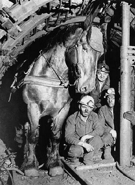 Le Cheval dans la mine