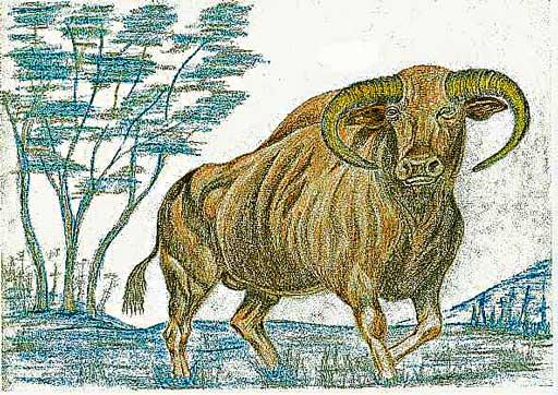aurochs2